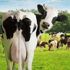 Visit Our Dairy Products Page