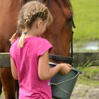 Visit Our Equine Products Page
