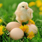 Visit Our Poultry Products Page